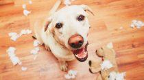 Best Dog Anti-Chew Spray