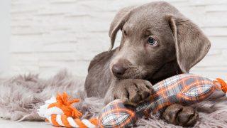 Best Dog Anxiety Jacket