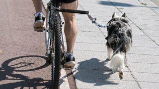Best Dog Bicycle Leash