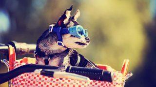Best Dog Bike Carrier