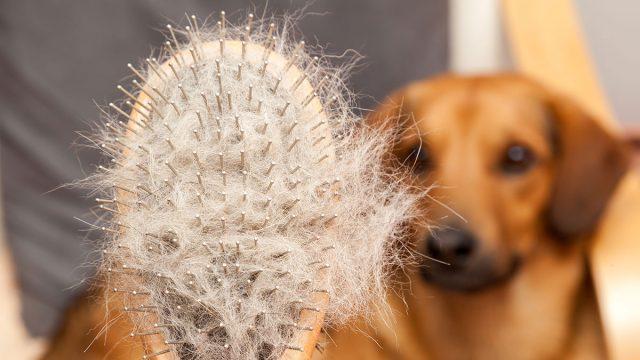Best Dog Brush