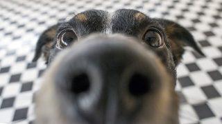 Best Dog Camera