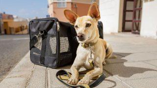 Best Dog Carrier