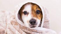 Best Dog Conditioner
