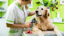 Best Dog Grooming Table