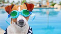 Best Dog Pool