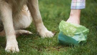 Best Dog Poop Bags
