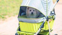 Best Dog Stroller
